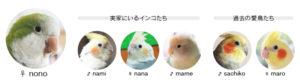 うちの鳥達
